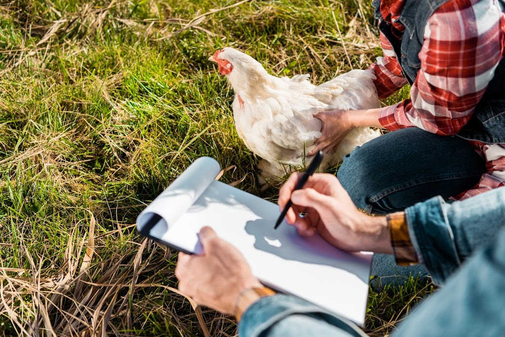 A chicken keeper's tips for checking in on your chickens and keeping them healthy.