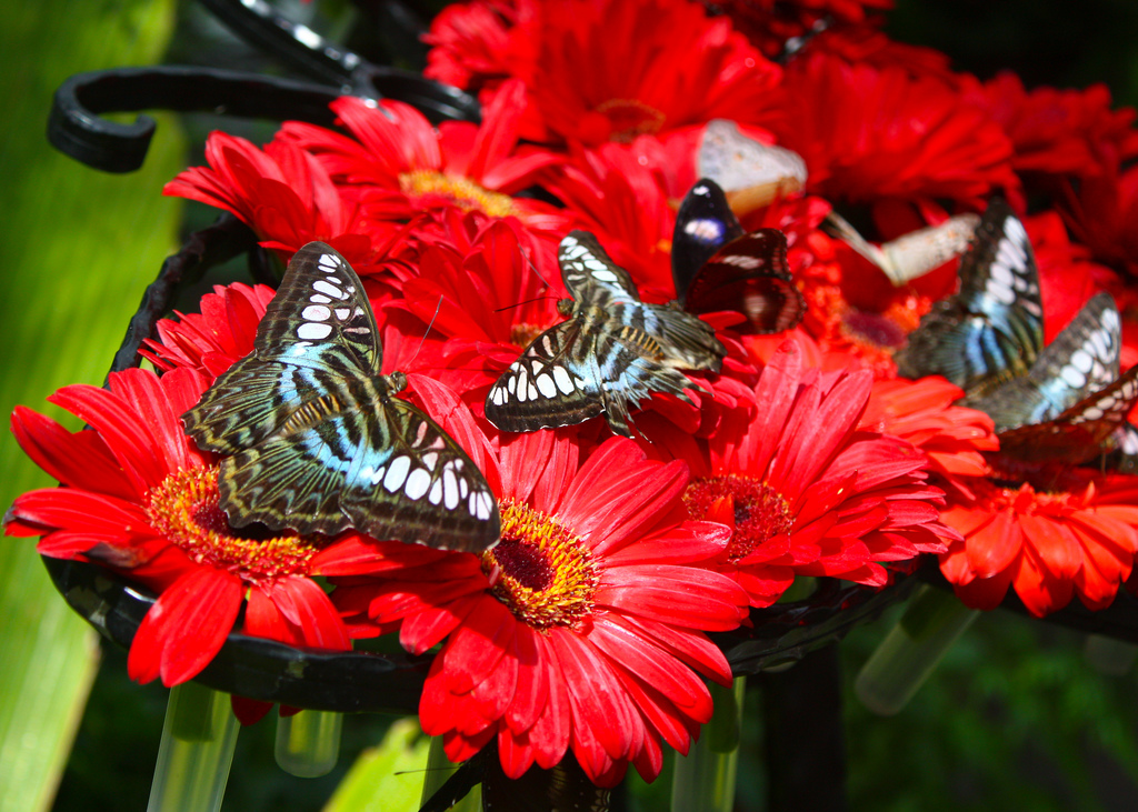 Butterfly Gardens: How To Build A Garden That Will Attract ...