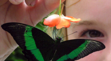Butterfly Gardens: How To Build A Garden That Will Attract Butterflies