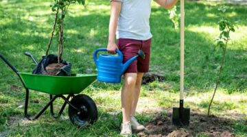Before You Buy Trees Online: My Experience Planting Bare Root Trees vs. Potted Trees In Containers + Why I'll Be Buying From The 'Fast Growing Trees' Site Again