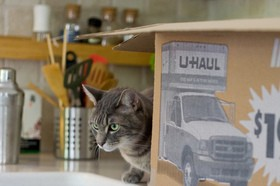 cat-and-moving-box-by-mava.jpg