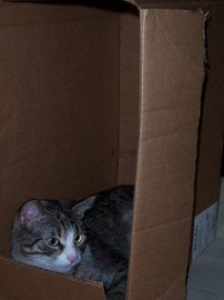 cat-in-a-box-by-frogs_rock_my_socks.jpg