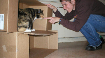 9 Moving Tips For Those Who Have Pets