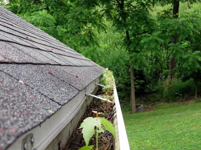 Before you buy gutter guards review these pros cons of installing before you buy gutter guards review these pros cons of installing gutter covers the household tips guide solutioingenieria Gallery