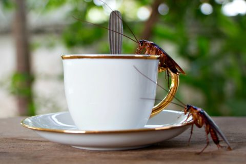 Yes, roaches like coffee! Here's why...