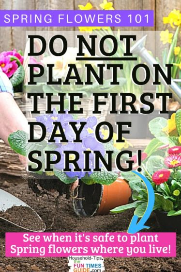 When to plant spring flowers to avoid a damaging frost!