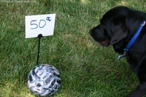 dog-ball-for-sale