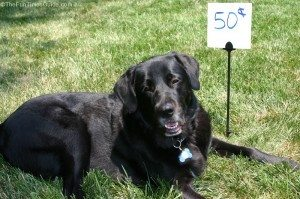 dog-for-sale