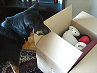 dog-moving-box-by-harmonicagoldfish.jpg
