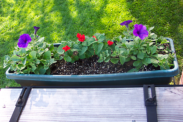 The flower box on our back steps.