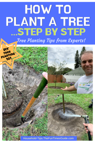 How to plant a tree step by step