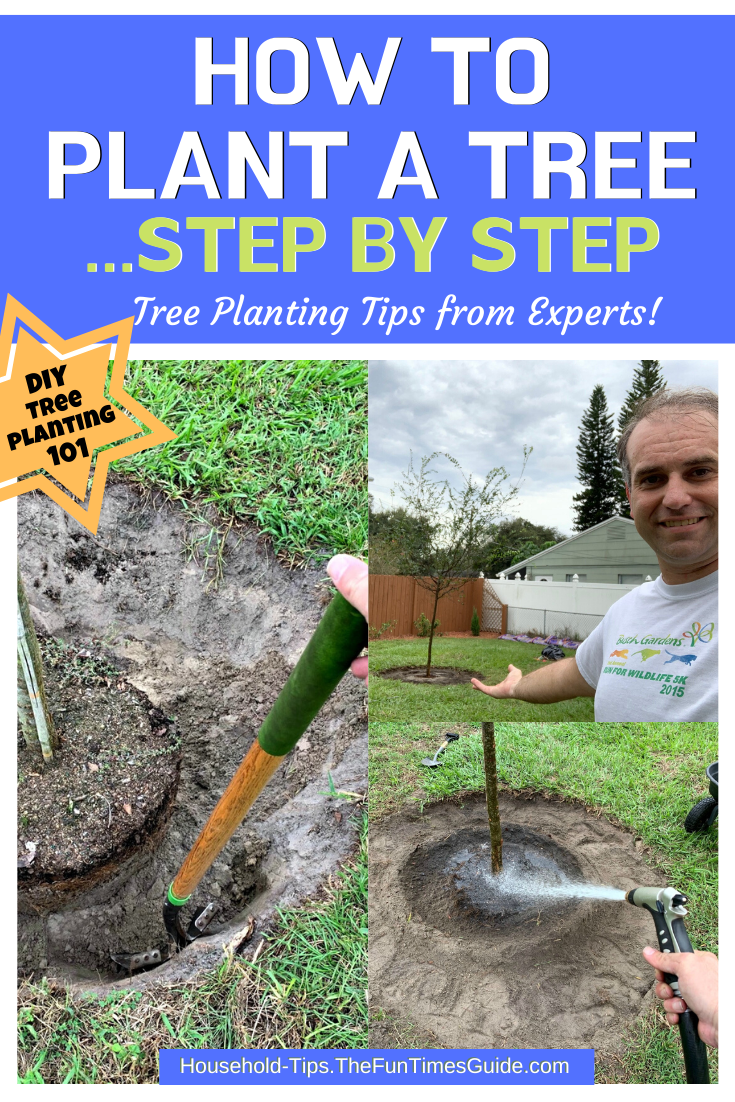 Tree Planting 101: How To Plant A Tree Step By Step + Expert Tips For Planting Trees And Caring For A Newly Planted Tree Yourself