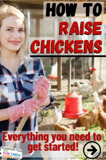 How to raise chickens in your backyard - Everything you need to get started raising chickens!