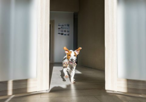If you have a dog, there are a number of reasons to consider luxury vinyl flooring.