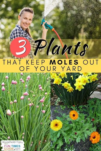 Plants that keep moles out of your yard!