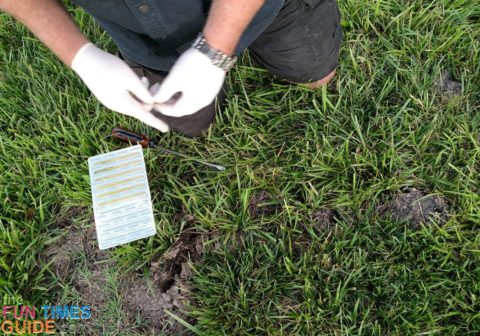Here, Jim is putting the baited worms into the mole holes in our yard.