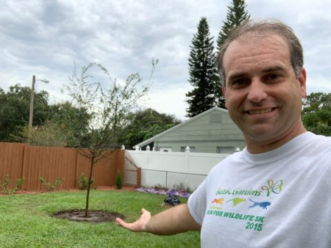 new tree planting tips and tricks