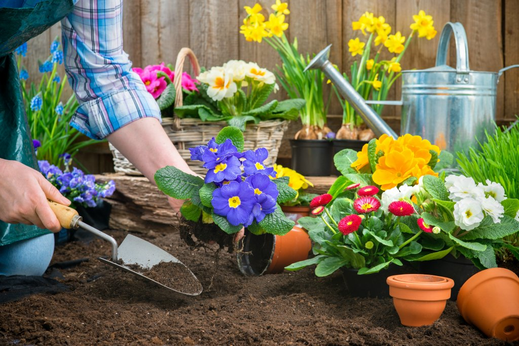 See when to start planting flowers for spring -- when to plant spring flowers based on the last possible frost date!