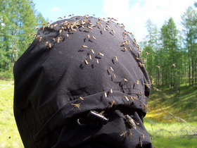 mosquitoes-in-Siberia-by-misspudding.jpg